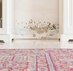 mold-damage-on-wall-in-house